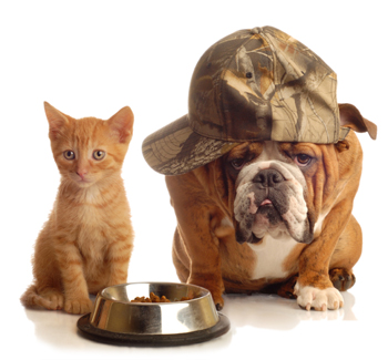 dog-cat-food-online
