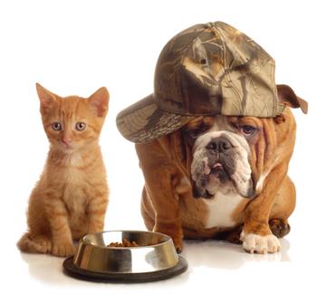 dog-cat-food-online
